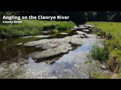 Brown Trout Fishing On The Clanrye, County Down