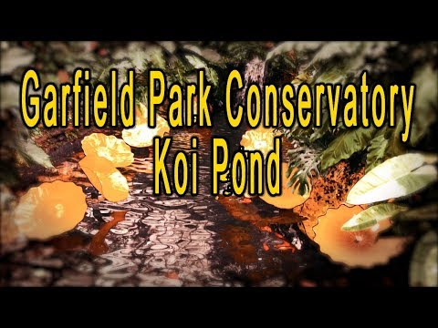 Garfield Park Conservatory Koi Pond Music Video Documentary – An Abstract Visual Experience