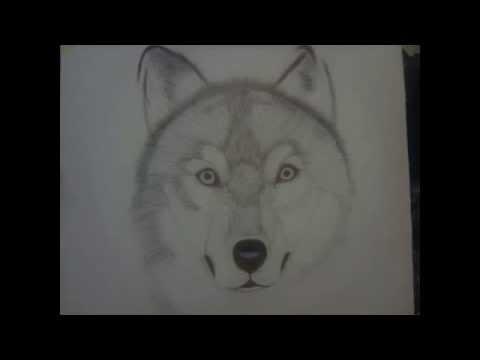 Dessin loup au stylo youtube - Un loup dessin ...