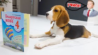 Щенок Брос Шоу ИДЕТ в Школу для Собак