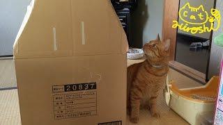 兄猫宅に行くと聞いたことのないネコの鳴き声が…。ひろしが引越しの日に...