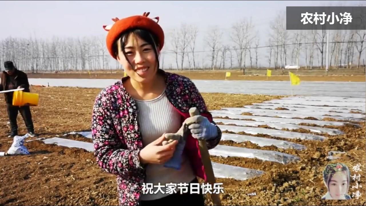 农村小净:农村女孩种芋头遭老爸批评,一旁的老妈说了啥?气的老爸扭头就走