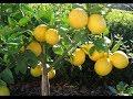 Orange Fruit Farming In Kenya