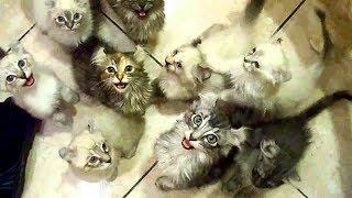 СОВРЕМЕННЫЕ ПРИКОЛЫ Смешные дети Коты рулят - Прикольное видео (2019) МатроскинТВ
