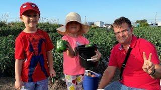 VLOG Едем на Ферму, собираем овощи и клубнику