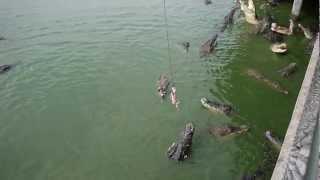 риболовля на крокодилів