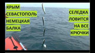 Рыбалка на Черном море. Севастополь. Селедка на все крючки