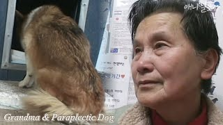 Grandma Who Takes Care of a Dog Abandoned by Paraplegia