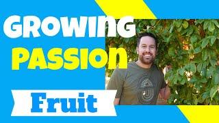 Growing Passion Fruit Vine