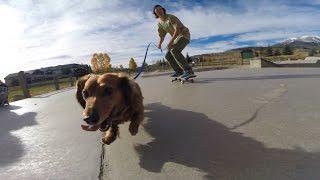 Gopro: Dachshund Skate Session