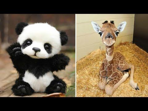 شاهد أشكال الحيوانات بعد الولادة مباشرة .. شيء مدهش  - نشر قبل 4 ساعة