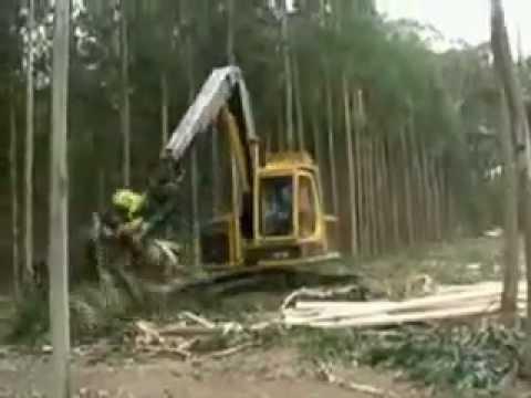 Máy khai thác gỗ AFM