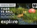 Tiger Vs Ball - Big Cat Rescue - Live Cam Highlight
