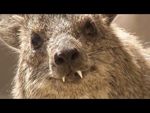 Best of Animal Teamwork | Part 1 | BBC Earth