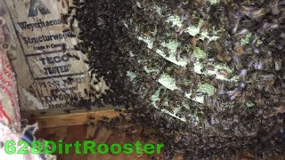 Why Don't You Just Poison The Bees??  I'll Show You Why. you 検索動画 28