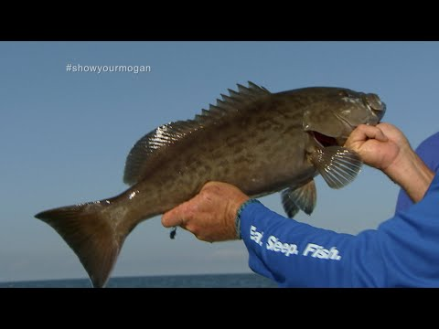 Inshore Grouper Fishing On Light Tackle Off Of Homosassa Florida