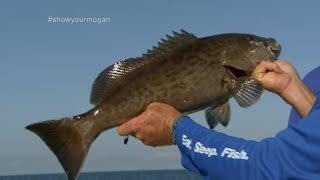 Inshore Grouper Fishing on Light Tackle Off of Homosassa Florida
