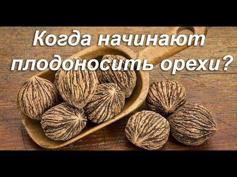 Вопрос: Подскажите как отличить орех Зибольда от ясеня?