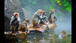 Китай, остров Хайнань. Экскурсия Остров обезьян. На Кирилла напала обезьяна. День 11.