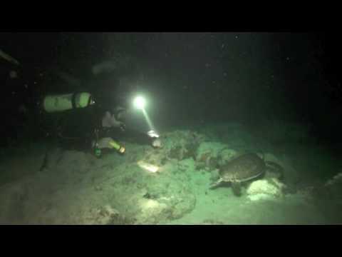 week 11, 2010 - Ocean Explorer Video Log, Night Dive