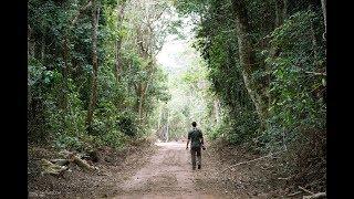 WanderingThru Odzala - Congo Rainforest
