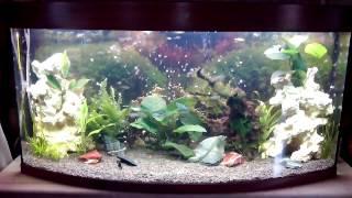 Панорамный аквариум Биодизайн Панорама 350, цвет швейцарская груша, объем 320 литров(, 2015-06-03T18:04:34.000Z)