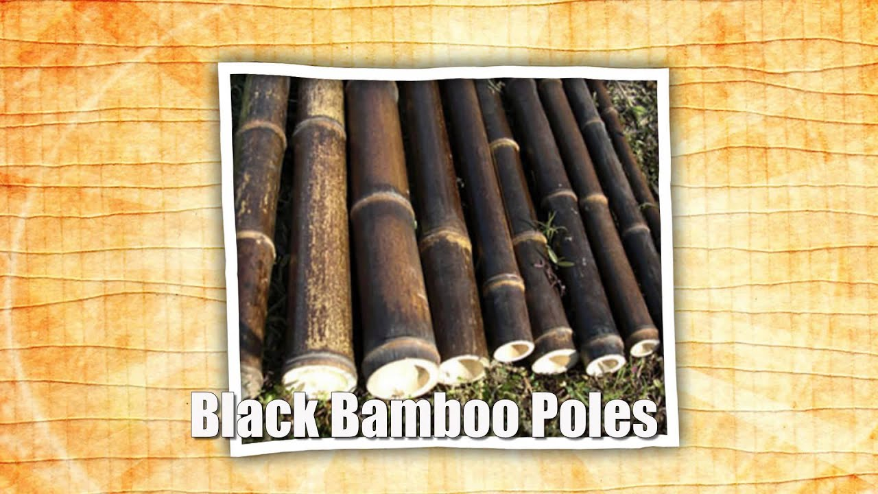 Purchase bamboo poles for sale