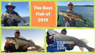 Best of 2019 All the Big Fish One Big Video