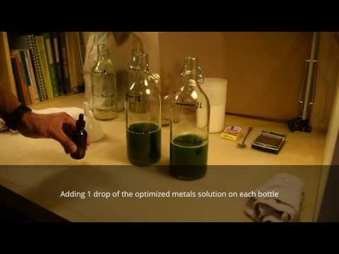 Growing Spirulina algae - Expanding the culture (home edition)