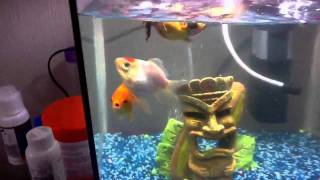 Swim bladder disease!!! HELP and tropical fish update