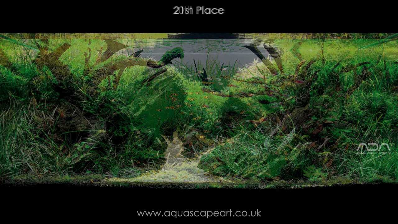 IAPLC 2011 Top 27 Aquascapes   International Aquatic Plants Layout Contest    YouTube