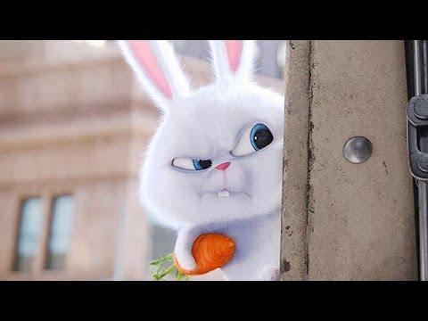 Трейлер домашние животные мультфильм 2016