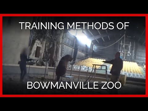 Training Methods of Bowmanville Zoo Owner Michael Hackenberger