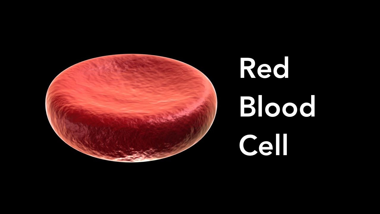 What U0026 39 S Inside Red Blood Cells  Class 7  Chapter 11