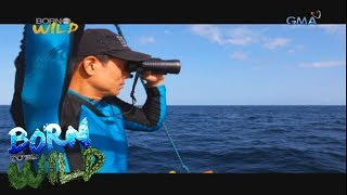 Born to Be Wild: The 7th humpback expedition in Babuyan Islands
