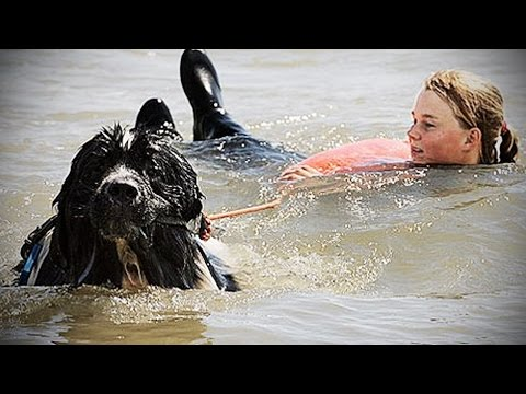 DOGS SAVING OWNERS ★ Dogs Helping & Protecting their Owners