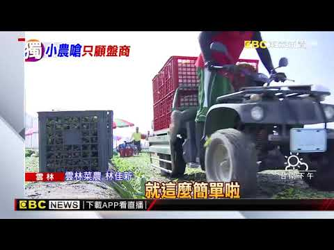大砲菜農林佳新 怒嗆農委會「只顧盤商扼殺農民」