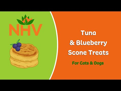 DIY Tuna & Blueberry Scone Treats for Cats & Dogs
