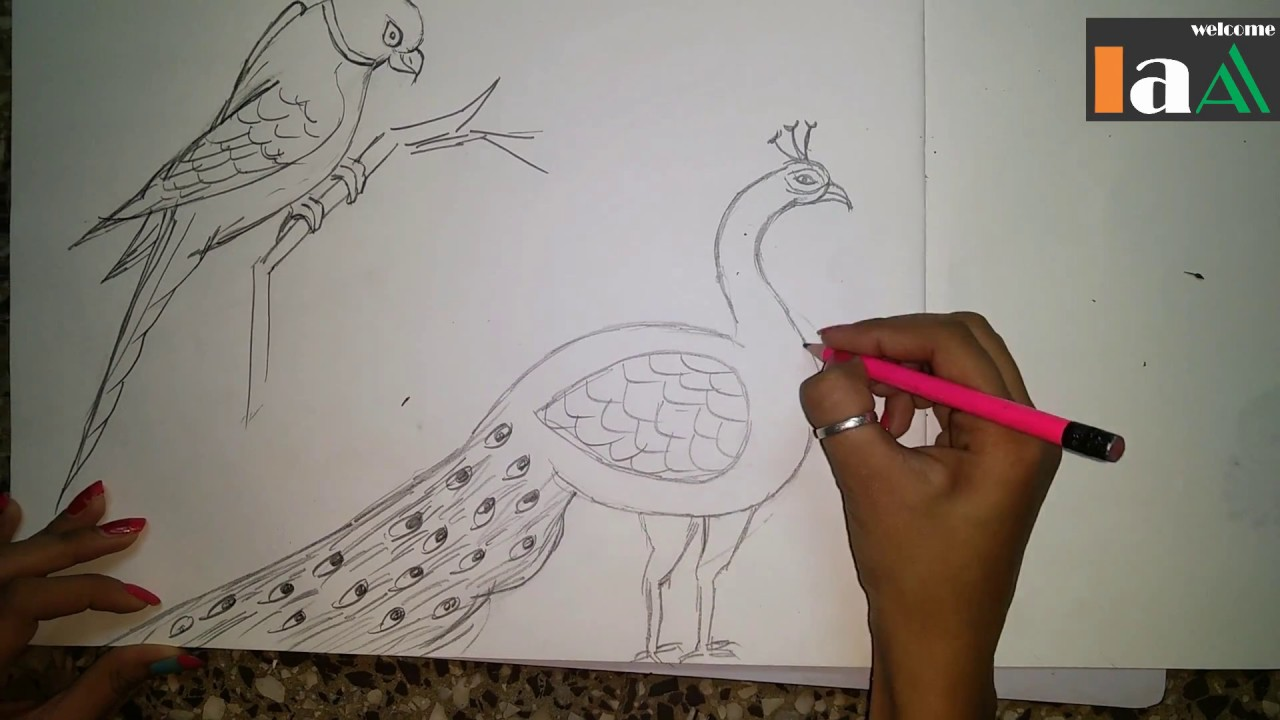 how to draw a peacock and parrot step by step easy - YouTube