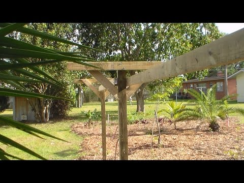 "How to Build a ""T"" Trellis"