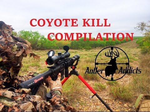 Coyote Hunting Kill Compilation – Dirt Naps