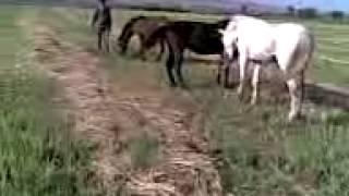 Драка животных лошади