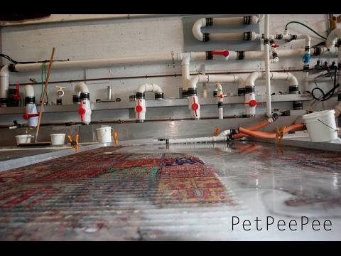 Oriental rug cleaning Machine