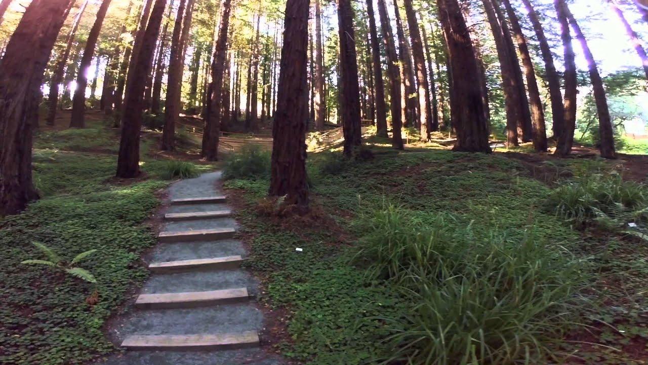 Superbe UC Botanical Garden At Berkeley