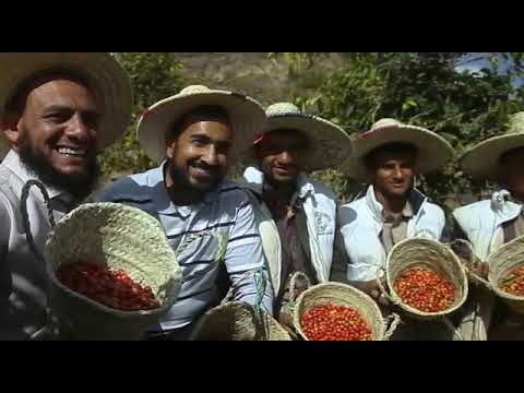 Yemen Mocha coffee