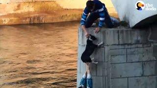 Man Jumps Off Bridge To Save Dog