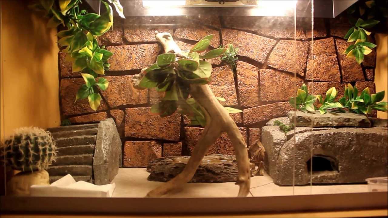 leopard gecko care video   youtube