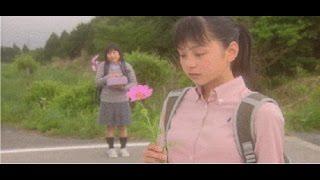 秋桜(こすもす)予告