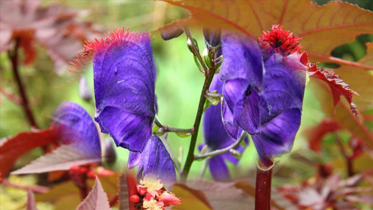 Dangerous flowers most dangerous flowers in the world top dangerous flowers most dangerous flowers in the world top dangerous flowers in the world izmirmasajfo Gallery