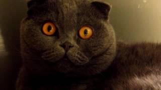 Кот смотрит фильм Ужасов,он в шоке.